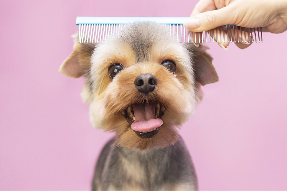 Dog Grooming And Care