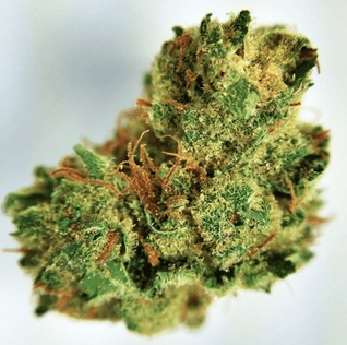 utilizing clinical weed